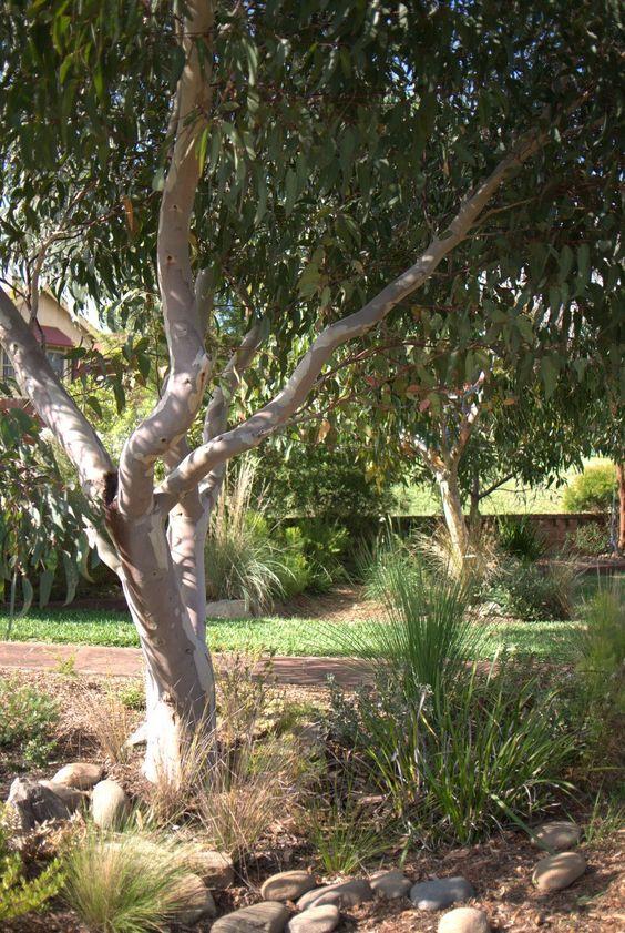 Native Front Garden Australian Native Gardens 400 x 300