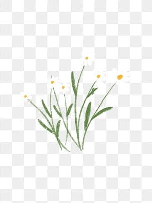 Plant Flower Small White Flower Daisy Flower White Flowers Hand Drawn Plants Png Transparent Clipart Image And Psd File For Free Download Flower Line Drawings Flower Drawing Flower Clipart