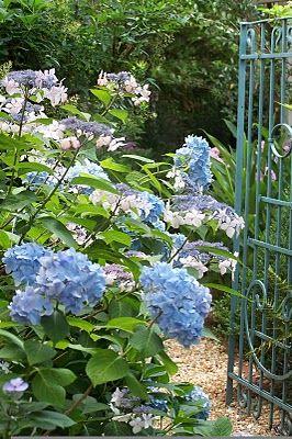 Nada mejor que las hortensias para decorar nuestra entrada a casa...