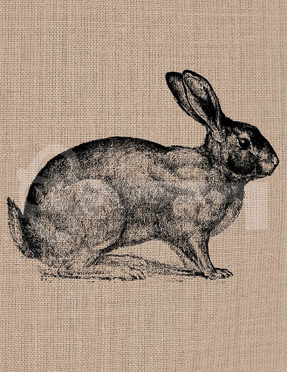 Hey, I found this really awesome Etsy listing at https://www.etsy.com/listing/150654947/beautiful-rabbit-digital-download-image