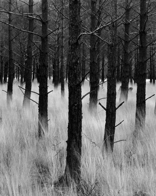 B: Dark Forest, Black Trees, Dark Trees, Color Contrast Photography, Richard Childs, Burnt Woods, Afterburn Torridon