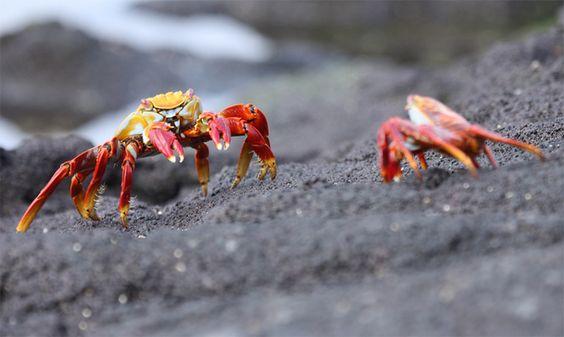 Die Artenvielfalt machen die Galápagos Inseln zu einem einzigartigen Naturreservoir. (Seven Bedard/cc)