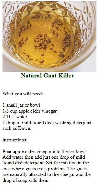 NATURAL GNAT KILLER Apple cider vinegar + water + dish soap.  This works! You can mix a smaller amount since gnats are so small and put in a very small container.