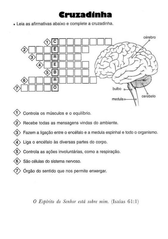 220 Atividades De Ciencias 4ª Serie 1 Com Imagens