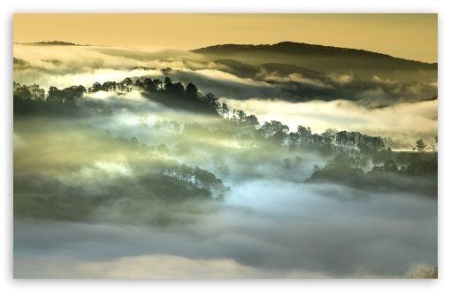 Download Morning Fog Forest Vietnam Hd Wallpaper Da Lat