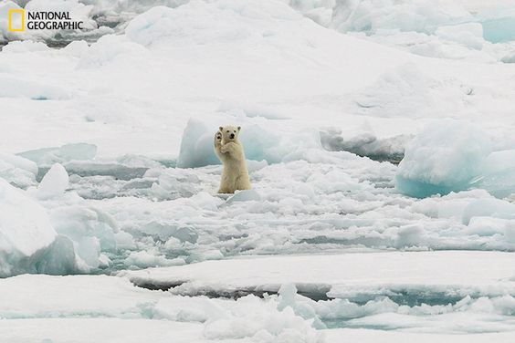 Magnificent Entries in the National Geographic Photo Contest 2014