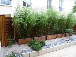 Haie bambou bac recherche google maison pinterest - Haie de bambou en pot ...