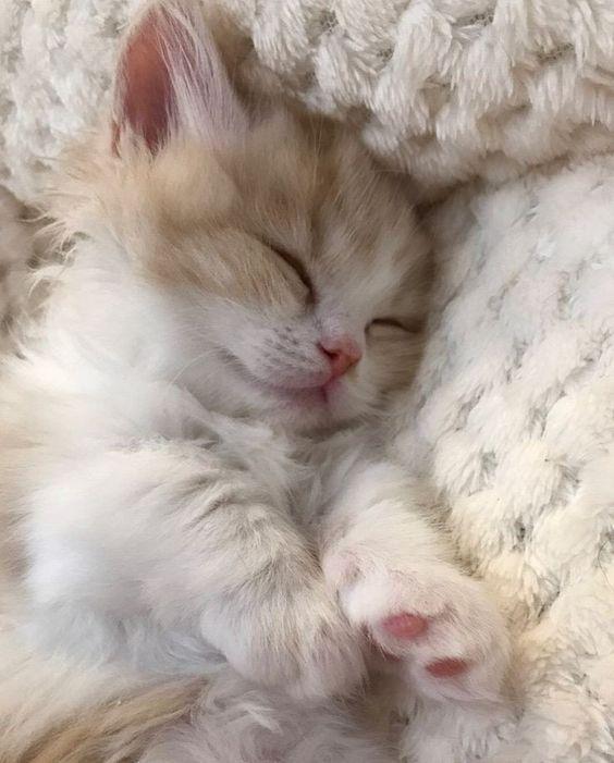 Tibi S First Litter Redux Kitten Cute Animals Animals