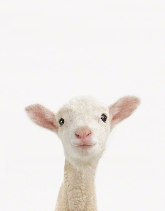"Close-up baby animal photo series ""Little Darlings"" by Sharon Montrose."
