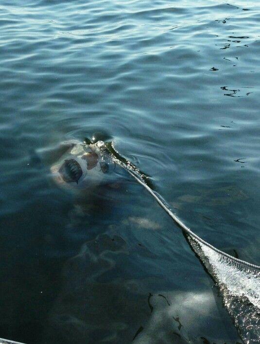 When sharks aren't enough...omg!