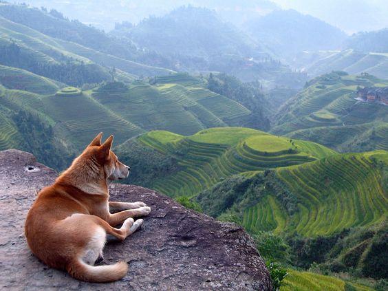 http://www.hdwallpapersarena.com/wp-content/uploads/2013/03/A-Dog-and-a-Beautiful-Landscape.jpg