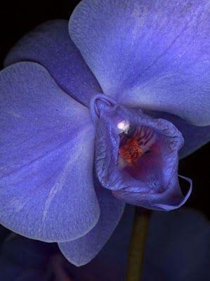 purple orchid flower  Werte sichern für die nächsten Generationen!  http://spari.guenther.simplymaxx.info/     http://www.contactcreators.com/?welcome=w2w203u2
