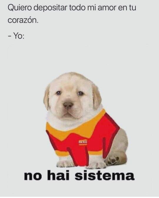 Te Amo Pero Memes Perros Memes Divertidos Memes