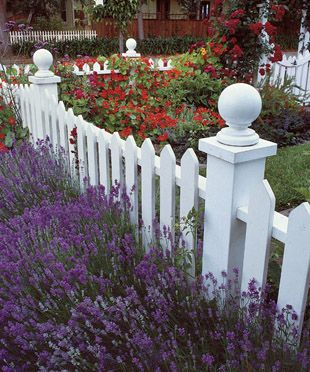 Fence Picket Fences And Lavender On Pinterest