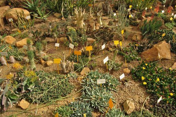 Jardín botánico de cactus y otras suculentas 'Mora I Bravard' de Casarabonela. | Naturaleza Urbana