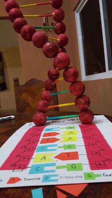 estructura del adn escuela ideas pinterest