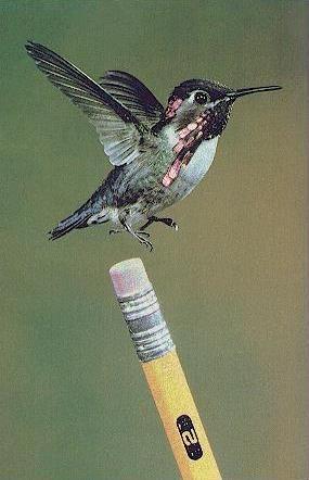 curiosidades sobre los pájaros