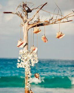 Shell tree at the beach...how charming.