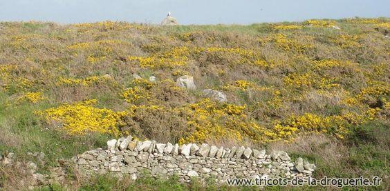 Les torsades, motif traditionnel des tricots Irlandais aux origines celtiques.  Où : Irlande, côte ouest, atlantique, Baie de Galway, Iles d'Aran