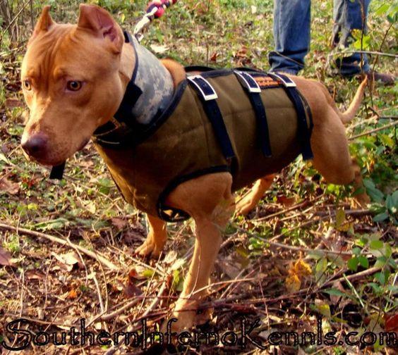 Dog Kennels In Red Deer Area