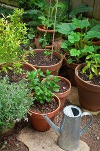 Expert Container Gardening Tips | LoveToKnow Blogs Garden