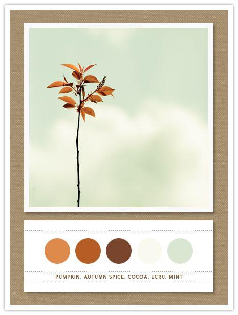 Pumpkin, Autumn Spice, Cocoa, Ecru, Mint