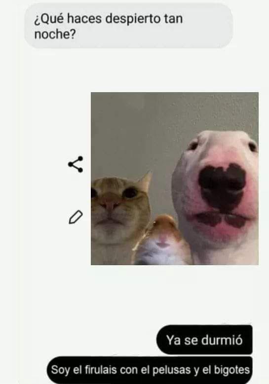Pin By Perrochabotruste On Memes Pinterest Memes Memes Funny Text Memes