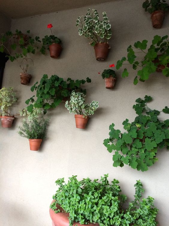 Stucco wall of restaurant Plants in clay pots hung with