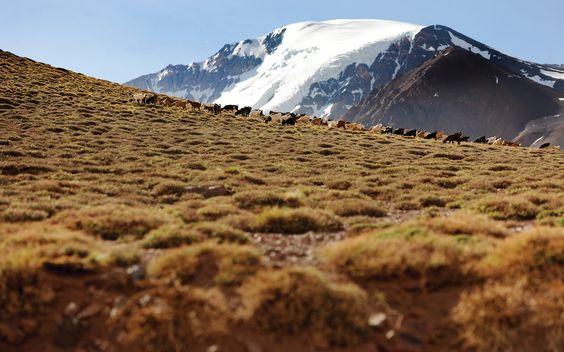 Trashumantes de la Cordillera de los Andes, los últimos pastores del hemisferio sur.  www.ghmtv.com