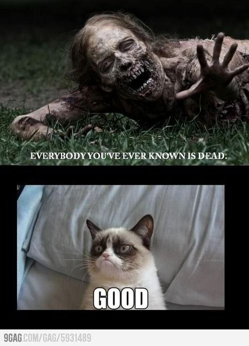 """Me during the zombie apocalypse.""     #GrumpyCat #Meme #Grumpy #Cat #TWD #Zombies"