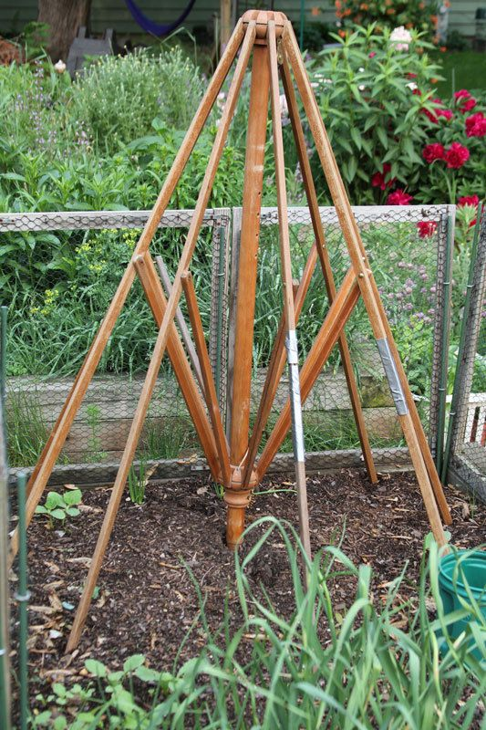 Repurpose an old outdoor umbrella as a trellis
