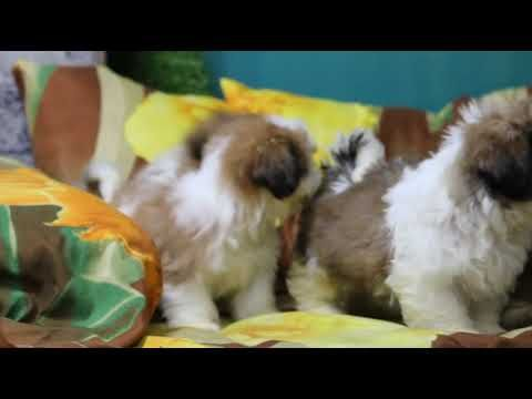 Dogs Image By Noneya In 2020 Cute Animals Cute Little Animals
