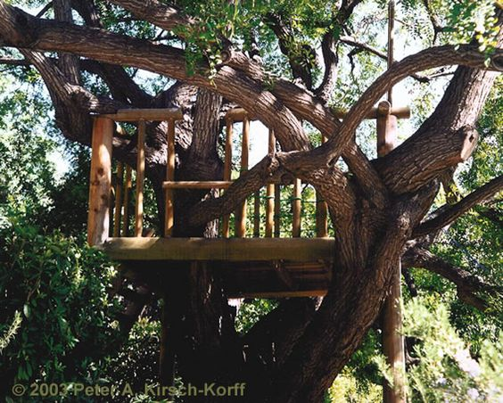 Hubby is about to make the kids a tree house! :)