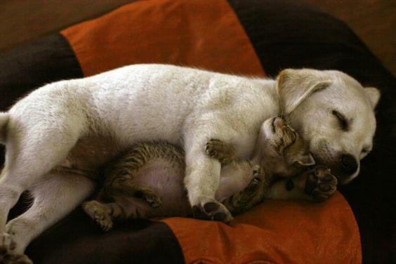 true love: Sweet Animals, Adorable Animals, Beautiful Animals, Animal Cuteness, Animal Cuties, True Love, Cute Animals, Pretty Animals, Pet Friends