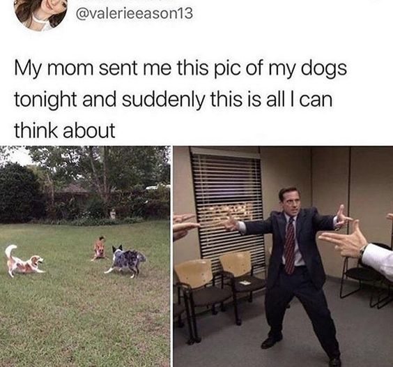 Top 25 Dog Memes Relationship With Images Funny Dog Memes Funny Relatable Memes Memes