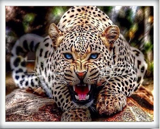 Buy Roaring Leopard Diamond Painting Kit At 30 Off Pretty Neat Creative Kucing Besar Fotografi Hewan Hewan