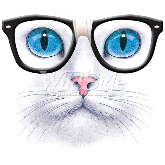 BLUE EYED CAT WITH NERD GLASSES | The Wild Side