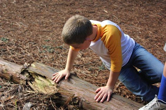 Nicolas looking under every log