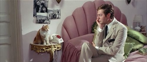 Kitty and Mastroiani