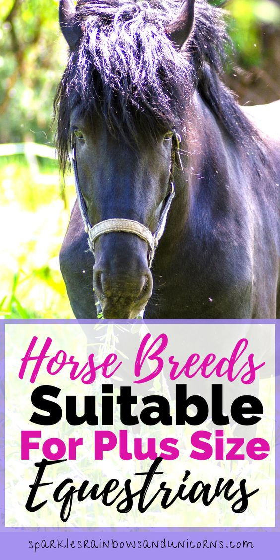 Despite becoming overweight, the love for horses and desire to ride   stays the same, which causes a problem. Many horses may not be   comfortable carrying you.   Whether you are riding in lessons, going to lease, or buy a horse,   you want to ride a horse that will be able to carry you without   struggling.  So what are the best horse breeds for plus-size riders?
