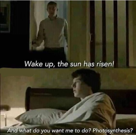 Photosynthesis Sherlock Funny Sherlock Really Funny Memes
