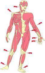 Neuropatische pijn of zenuwpijn [gezondheid.be]