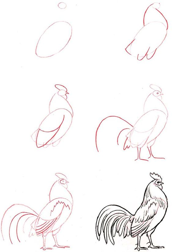how to draw a rooster easy