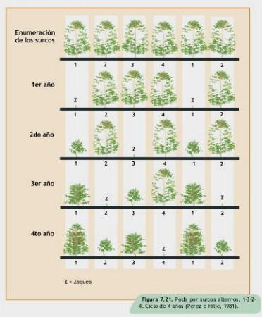 Manual del Cultivo de Café