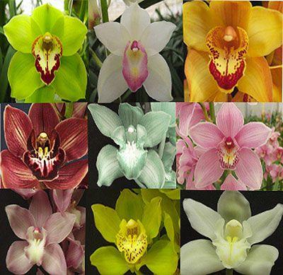 Orchid Potting Mix Recipe | Cymbidium Orchids . December 6, 2006, 9:50 ambetterhomesgardens. Have ...