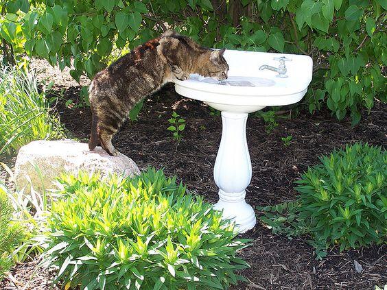 sink birdbath:
