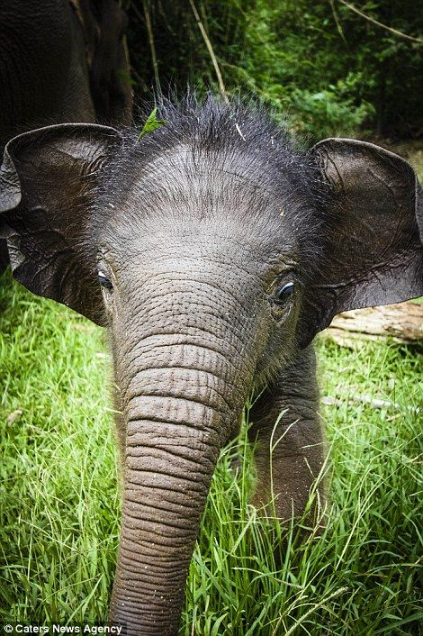The wildlife photographer says that has 'been extremely privileged to observe and photograph wild elephants', and now wants to 'give something back'