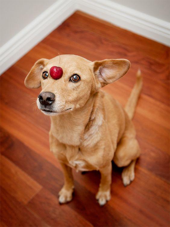 Chuck @ dooce.com.  I wish I had a dog just like him.