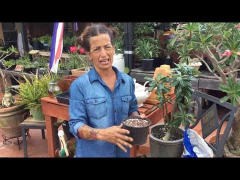 Youtube Types Of Soil Succulents Cactus And Succulents