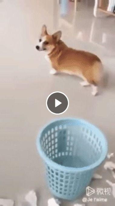 cachorrinho fez uma bagunça e sai correndo